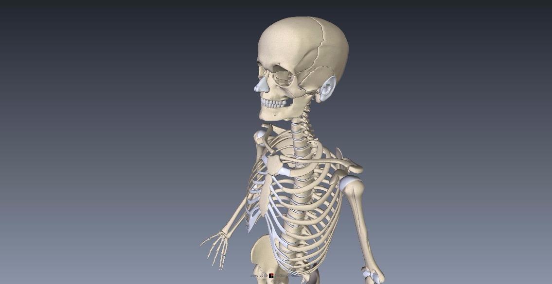 人体の構造を知るのに便利「BioDigital Human」1