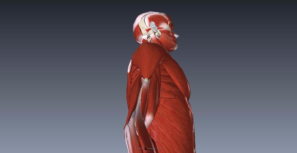 人体の構造を知るのに便利「BioDigital Human」2