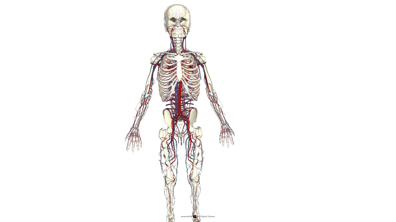 Quieres ver el cuerpo humano… por dentro? – Blología